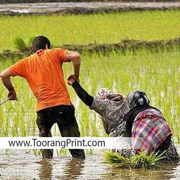برنج کیسه برنج گونی برنج