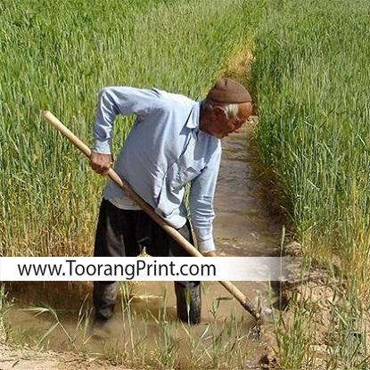 برنج و بسته بندی برنج