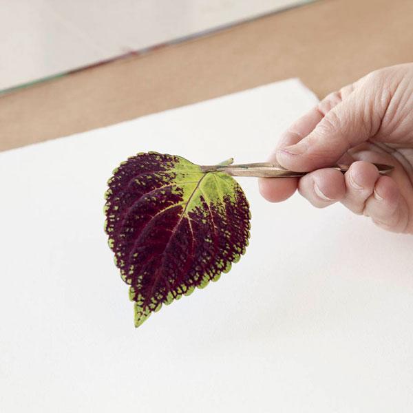 مرحله چهارم چاپ دستی با برگ، چاپ برگ، چاپ برگ در خانه