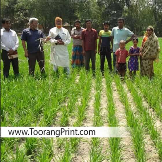 طراحی و چاپ کیسه برنج